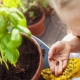 The Benefits of Teaching Children to Grow Food