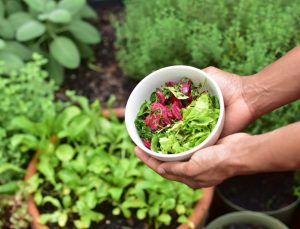 Home-grown herbs and vegetables make great salads