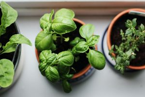 Herbs & vegetables can be grown in pots & containers