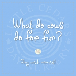 What do cows do for fun?